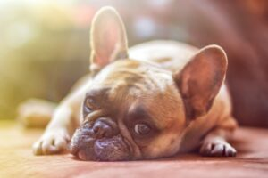 Animales de compañía y confinamiento